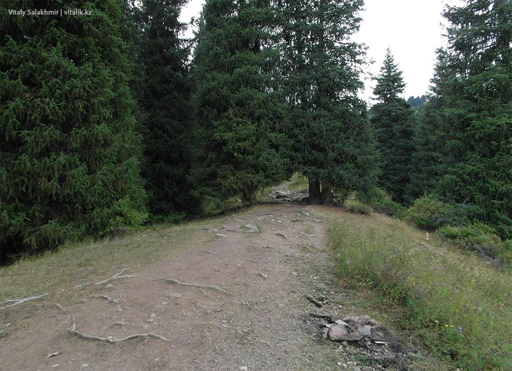 Тропа между елок, Фурмановка 2018