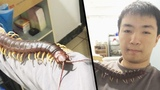 Man Lets Giant, Venomous Pet Centipede Crawl All Over Him