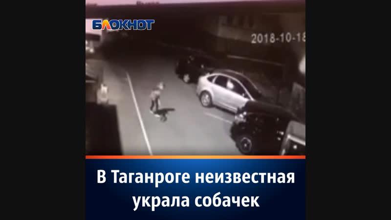 В Таганроге неизвестная украла собачек