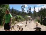 Ездовые собаки (2016) Sled Dogs
