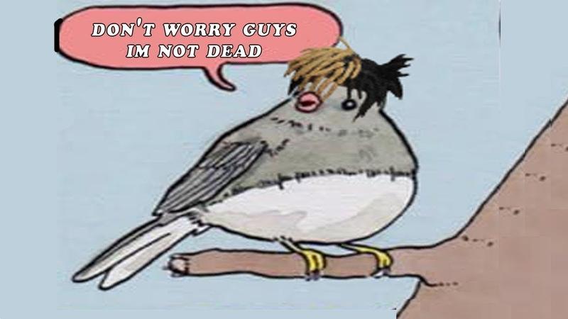 Annoyed Bird MEME COMPILATION V2