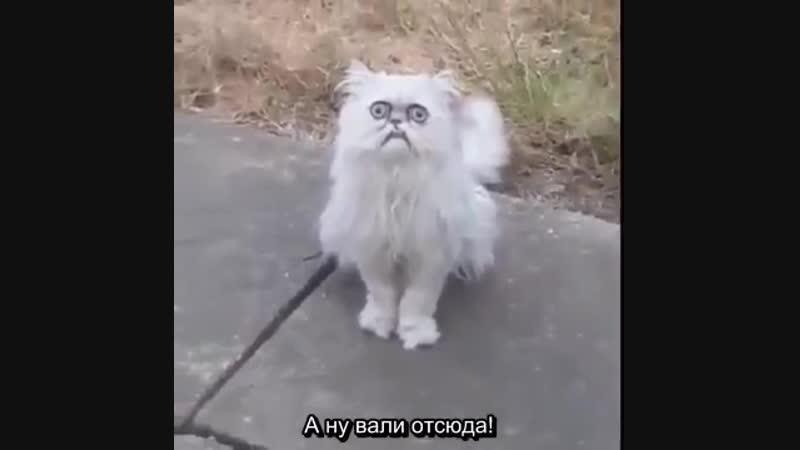 криповый кот и шумный ссыкун