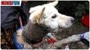 Tierschützer holten sofort das Fischernetz, als sie den Hund mit der Drahtspirale entdeckten!