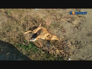 Умирающий пес на обочине два дня ждал помощи от людей