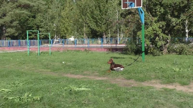 Чемпионат России 2017 г. по ОКД и ЗКС (ЗКС). (1)