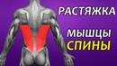 РАСТЯЖКА ШИРОЧАЙШИЕ МЫШЦЫ СПИНЫ Биомеханика