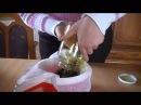 Цисты на печени, на почках и на яичниках - рецепт лечения.