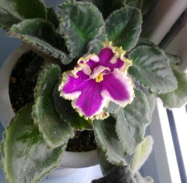 Цветы у Ликки VVUzC1qGxM4