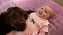 Labrador Retriever Puppies Funny and Cute Videos Compilation 4