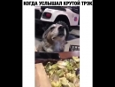 Animal_planet_vid_1_27082018_0248.mp4