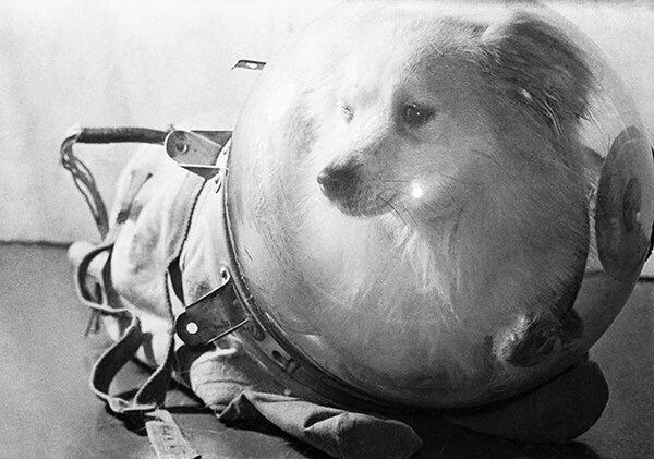 Собачка-космонавт Белка в скафандре