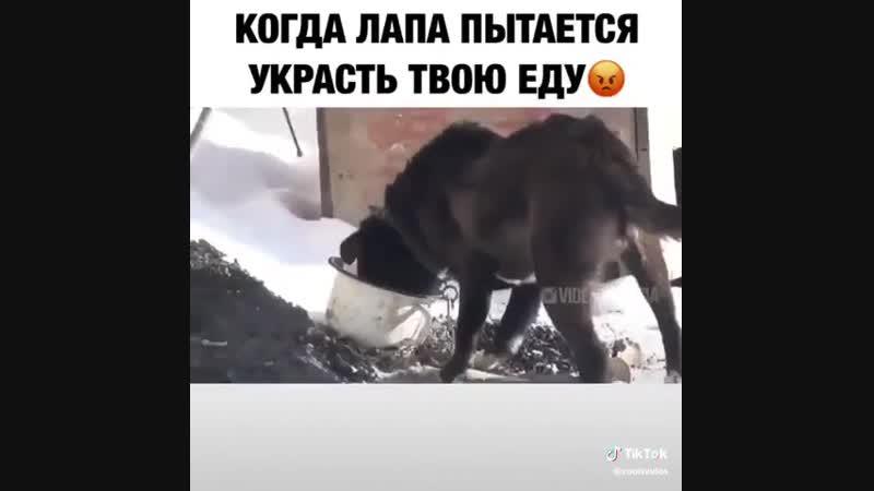 Дурная нога, покоя не дает)