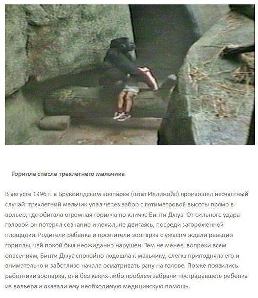 Героическое спасение людей животными