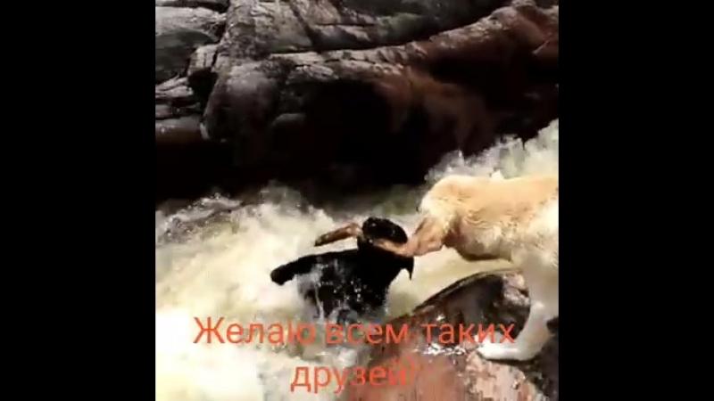 Video-758b0d600765b1743e41d8ca9c73fdf1-V.mp4
