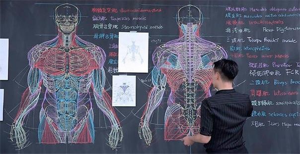 Познакомьтесь с талантливым учителем и практически живописцем Бен-Цюань Чанг, который рисует для своих учеников невероятные анатомические скетчи на доске