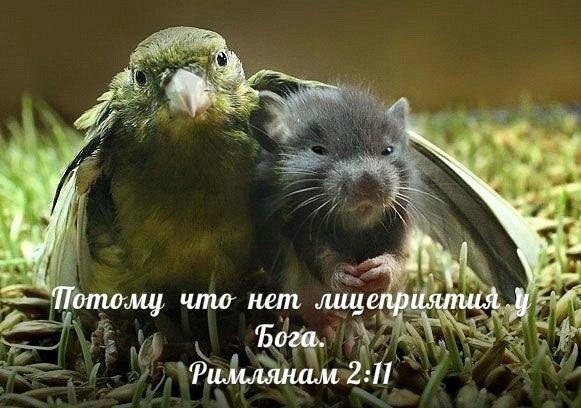 Открытки на Библейскую тематику F3NVpqx_mnY