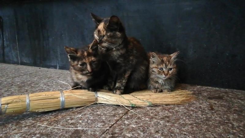Котята погибают на улице. Москва