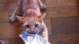 Смешные Коты и Кошки 2018 Приколы с Котами и другими Животными 2018 Приколы про Котов #86