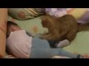 Кошка успокаивает малыша
