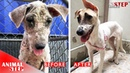 Hopeless Depression Sick Dog Has Been Rescued and Gets Wonderful Life