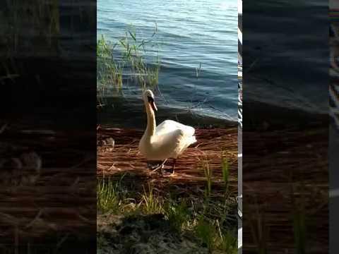 Поел сам - покорми лебедя! :)