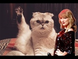 Taylor Swift's Cats - Funny Moments (2011 - 2018)