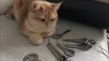 Olena UUTAi. My Jaw Harp &amp my Cat