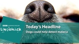 Dogs could help detect malaria Lingohack