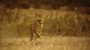 Мы бежим с тобой как будто от гепарда 🎬