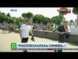 Расплескалась синева- Журналист НТВ получил по лицу в прямом эфире.