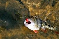 В самом начале весны, когда температура воды и воздуха еще не пришли в норму, и вся рыба находится...