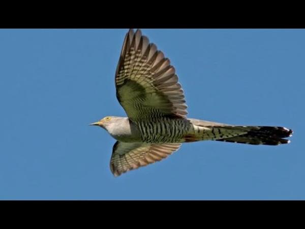 Перелетные и зимующие птицы (рассказывает орнитолог Надежда Егорова)