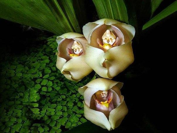 Такие вот орхидеи. Когда у природы свое чувство юмора.