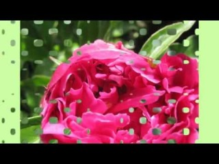 Удивительный мир цветов.Слайд-шоу.