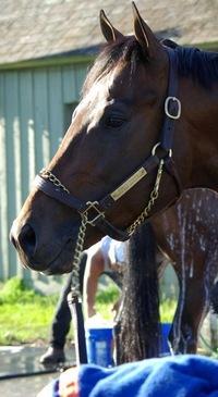 Brokered Stallion, 25 сентября 1994, Екатеринбург, id204579822