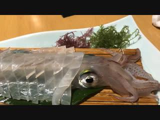 Alive squid sasimi