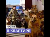 Приют для собак в квартире в Южном Бутове — Москва 24