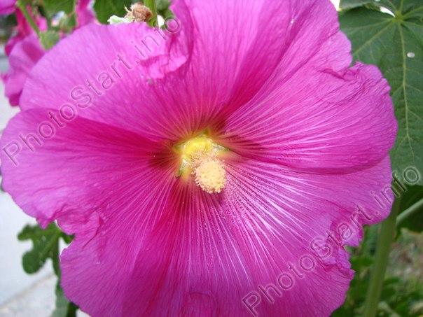 Квіти вазони сувеніри подарунки updated