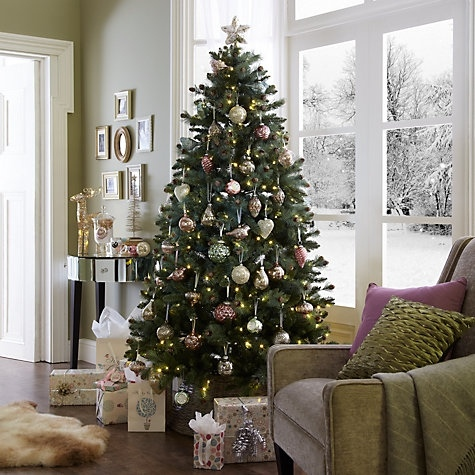 Живая елка на Новый год 2020: елка в горшке - как выбрать, правила ухода
