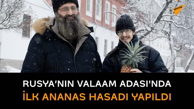 Rusya'nın kuzeybatısındaki Valaam Adası'nda ilk ananas hasadı yapıldı