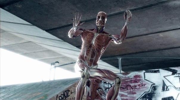 Тело человека. Грани возможного.