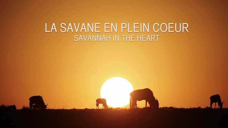 Laurent_Baheux_-_La_savane_en_plein_coeur_-_Savannah_in_the_
