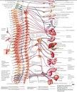Опытный мануал-реабилитолог-массажист с более 5-ти летней практикой оздоровления позвоночника и его коррекции.