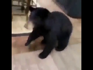 get the fuck off my property bear
