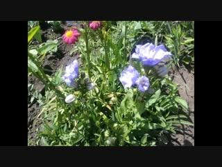 Мой огород - мои цветы - гордость-Школа цветоводства и садоводства