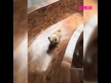 Собака катается с горки