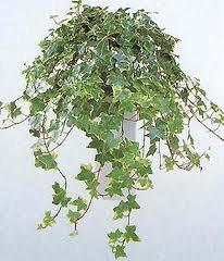 чернаямагия - Магия растений. Магические свойства растений. Обряды и ритуалы. Амулеты и талисманы из растений.  YUHuT1x2qfk