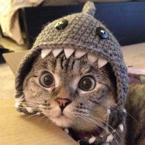 Бойся меня, я акула!!!, картинки: приколы про животных. Картинки