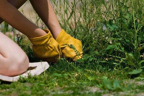 Как уничтожить сорняки без гербицидов?
