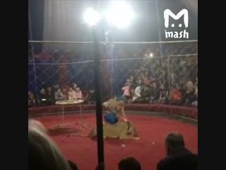 В Краснодарском крае львица напала на девочку в цирке